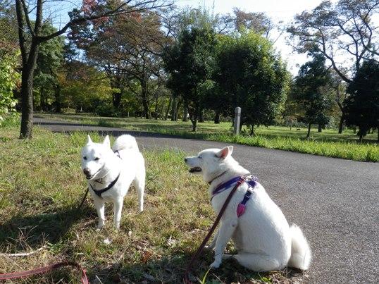 2012.11.07 武蔵野公園5