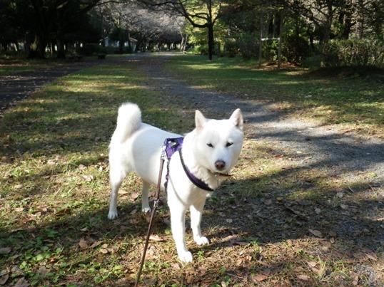 2012.11.07 武蔵野公園3・花