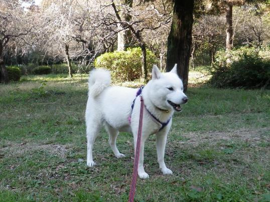 2012.11.07 武蔵野公園1・花鈴
