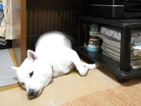 2012.11.08 今日の花鈴