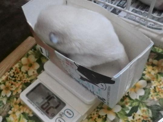 2012.11.14 体重測定2
