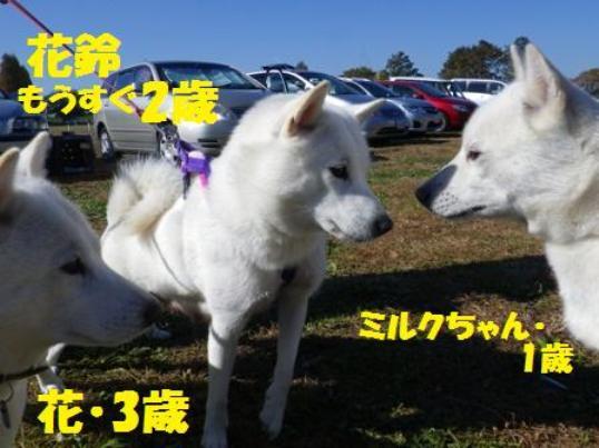 2012.11.26 北関東支部展1
