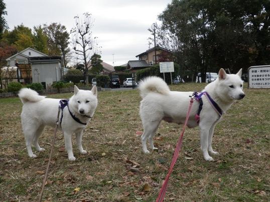 2012.11.28 朝の散歩2