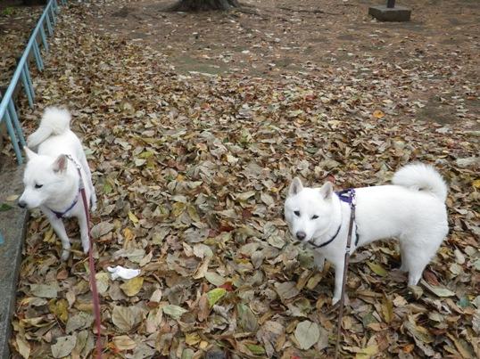 2012.11.28 朝の散歩1