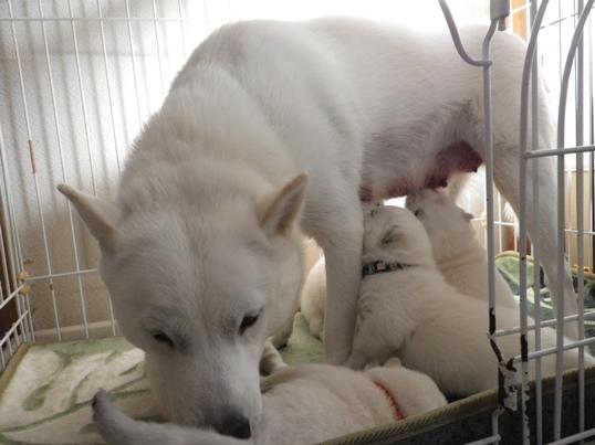 2012.11.29 シッコの世話と授乳と