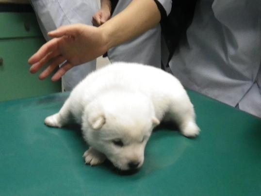 2012.12.1 健康診断(一狼)