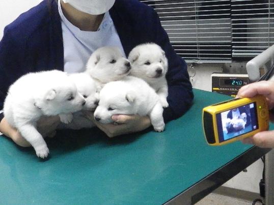 2012.12.1 健康診断・勢ぞろい