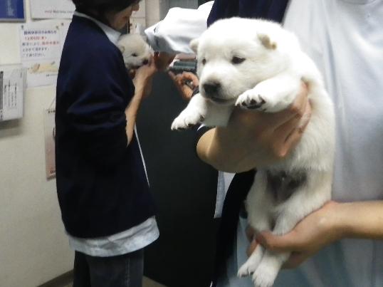 2012.12.1 健康診断(二狼)