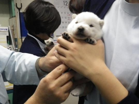 2012.12.1 健康診断(四狼)