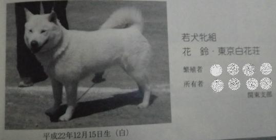 2012.12.3 春季本部展・獣猟競技若犬クラス1位