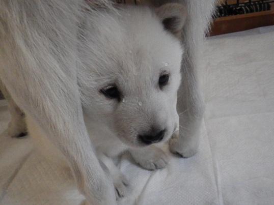 2012.12.13 水も滴る…五狼