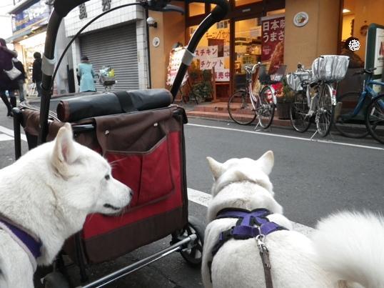 2012.12.16 お散歩デビュー2