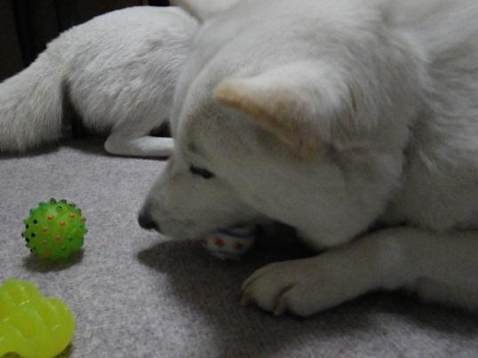 2012.12.17 ボール・花