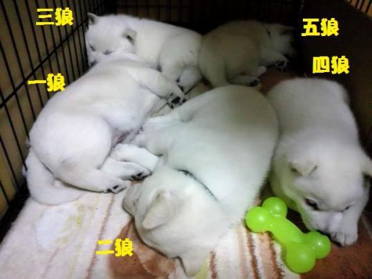 2012.12.17 寝てるよ~