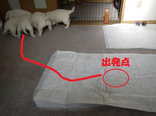 2012.12.19 おしくらまんじゅう