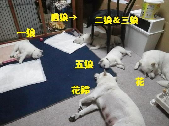 2012.12.29 今夜の白花家