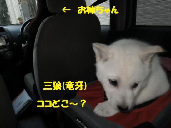 2013.1.2 初ドライブ・三狼(竜牙)