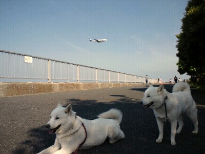 fc2blog_20120519155321e16.jpg