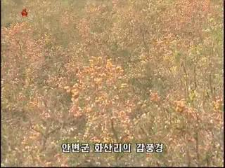 2012-10-23-19flv_000530120.jpg