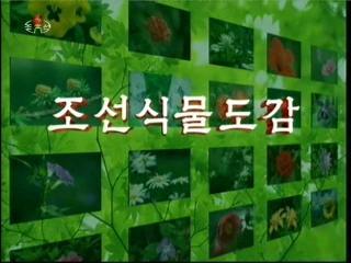2012-11-02-14flv_000012583.jpg