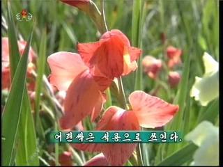 2012-11-02-14flv_000106458.jpg