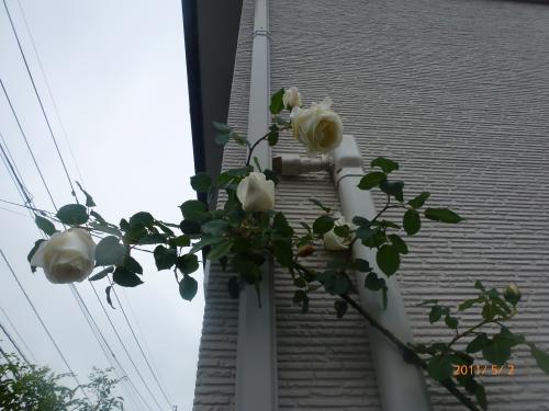 P1000493_convert_20120501140934.jpg