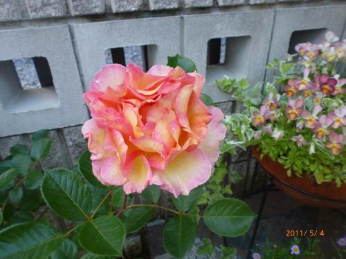 P1000524_convert_20120505212958.jpg