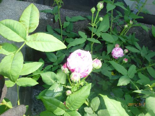 P1000570_convert_20120509081455.jpg