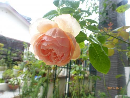 P1000839_convert_20120801193914.jpg