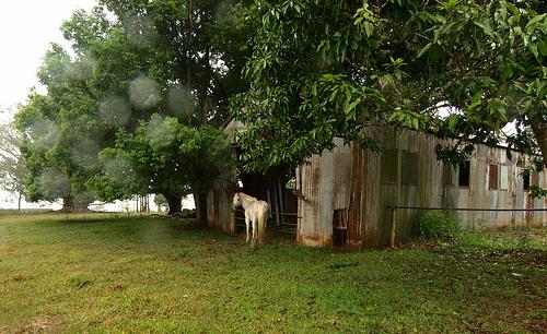 White-Horse-in-the-rain.jpg