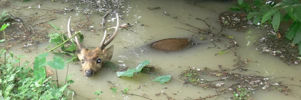 header_kaziranga_floods.jpg