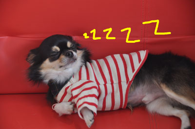 121117-hukusuke-1.jpg