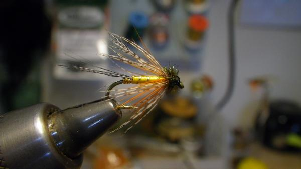 Straddle-bug mayfly