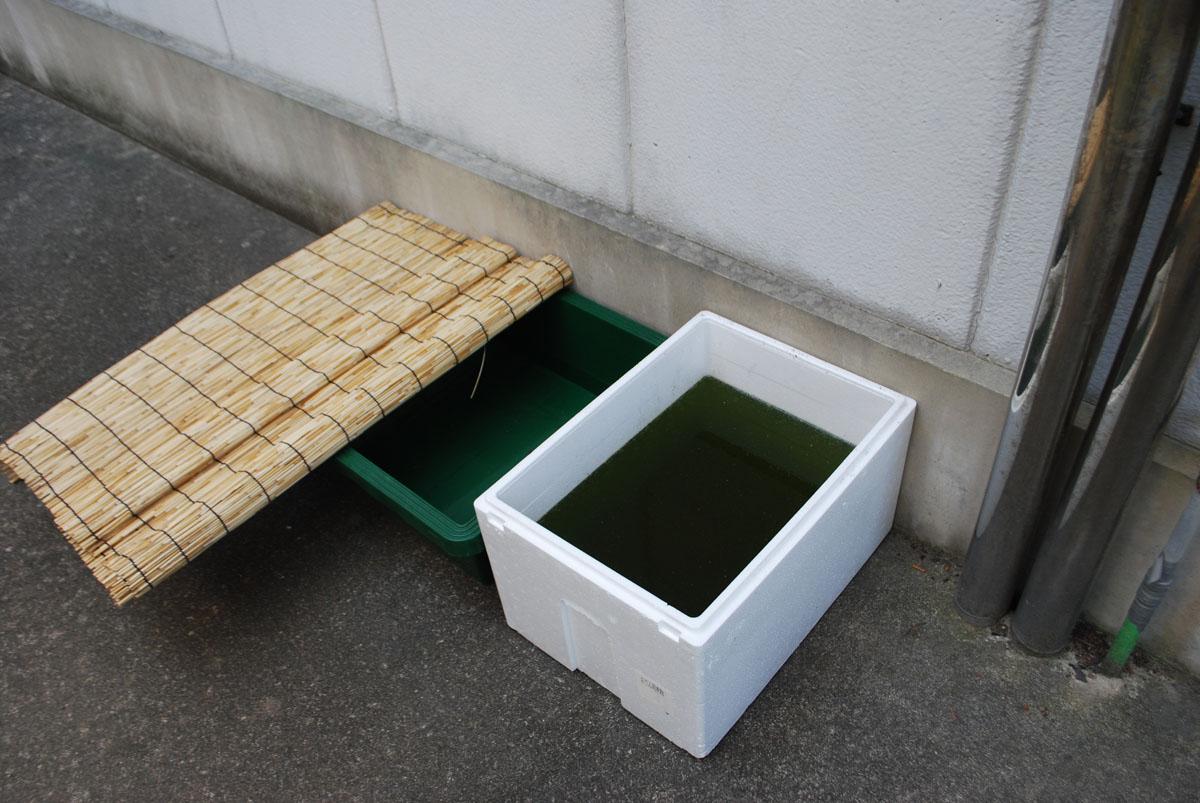 メダカ水槽