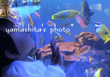 H25 初水族館