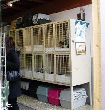 ショーケース 犬 販売 ベルギー