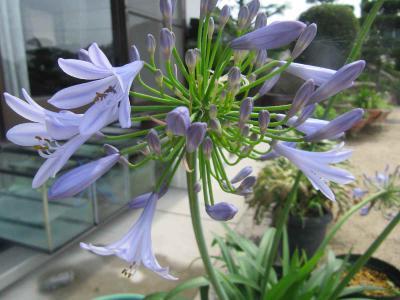 もらった花