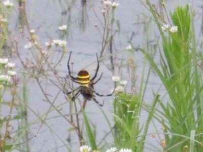 蜘蛛の糸で