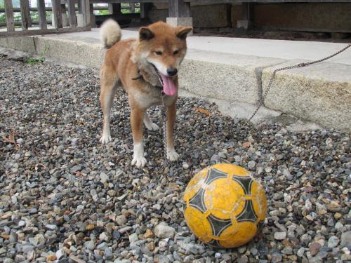 サッカーボールえもん1