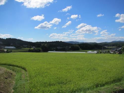 山口の田園風景