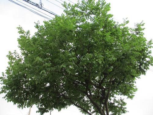 この木何の木 (7)
