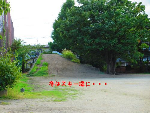 IMG_1318a1.jpg