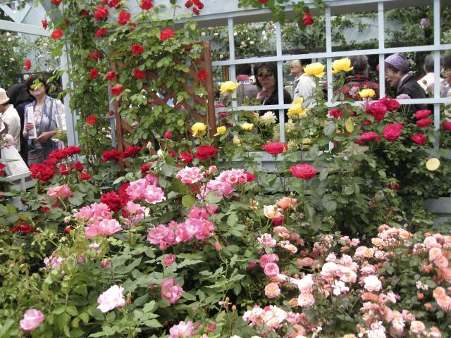 庭園 花のある庭園