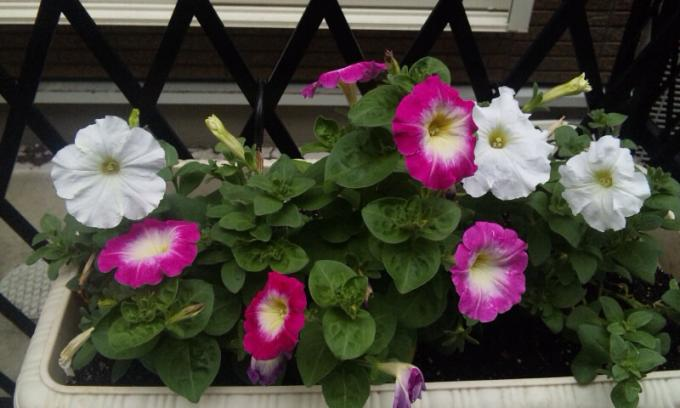 Flowers_20120626