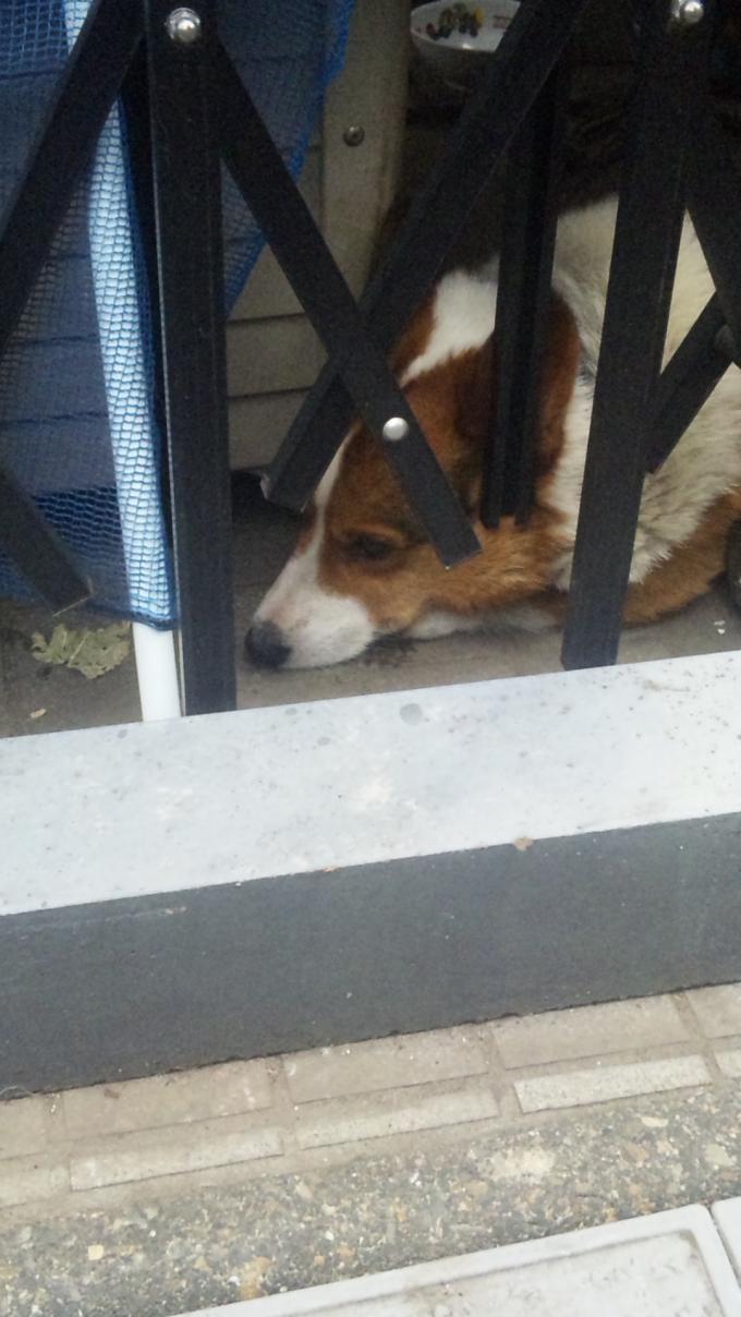 DOG_20120628