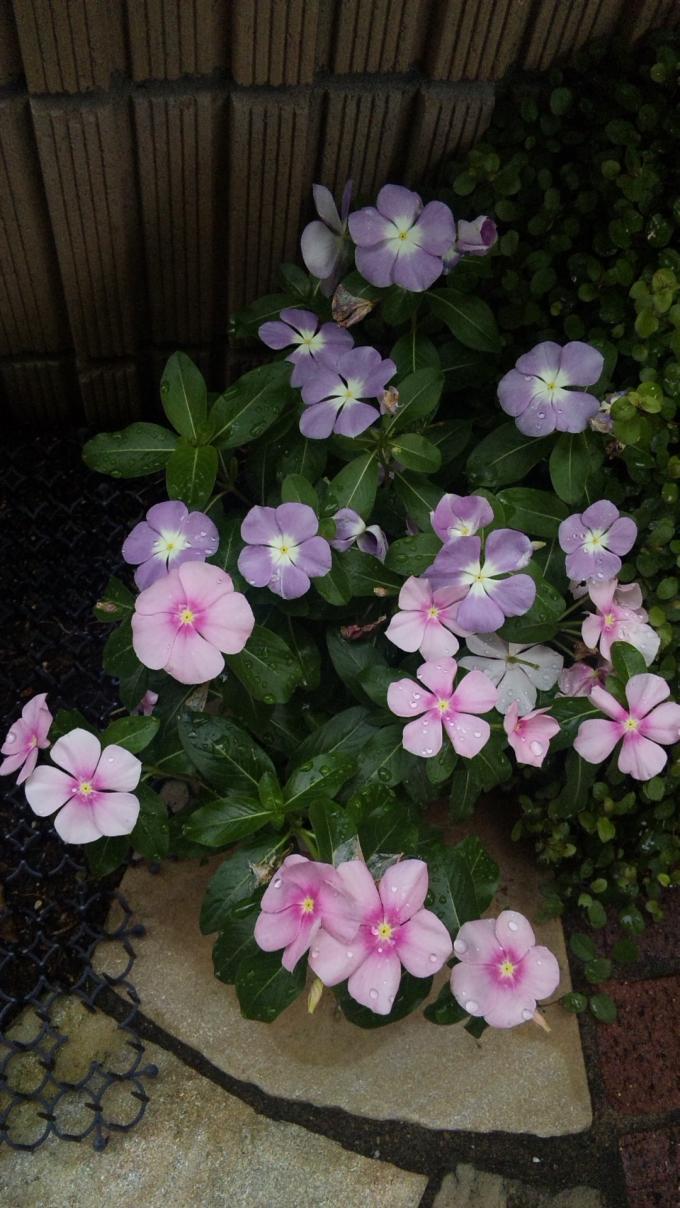 Flowers_20120706
