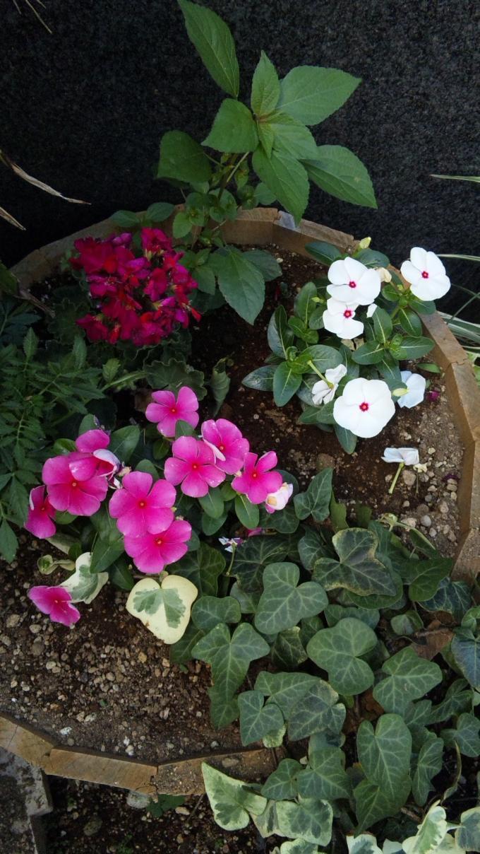 Flowers_20120730