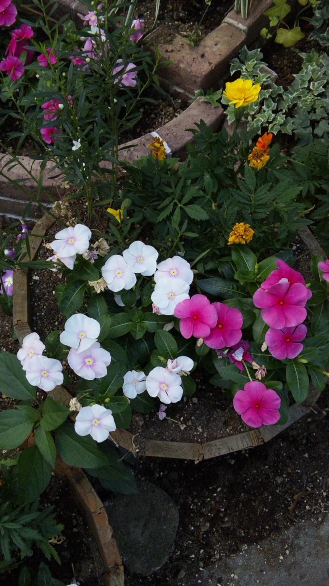 Flowers_20120731