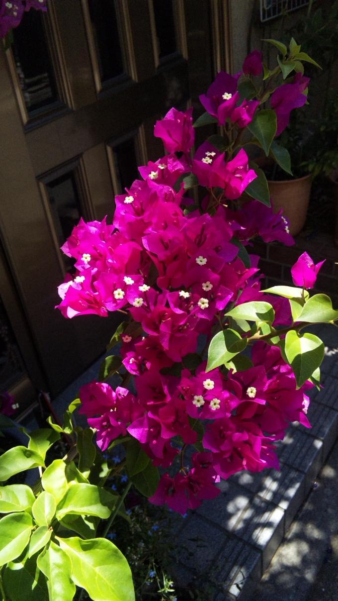 Flowers_20120807