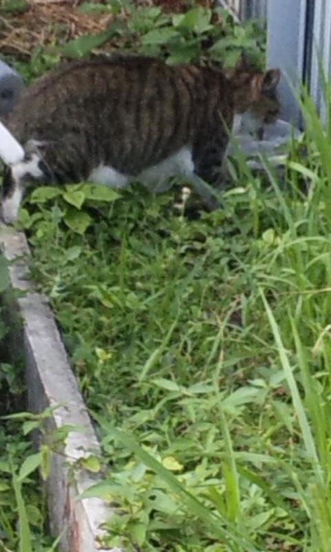 POST CAT_20120808